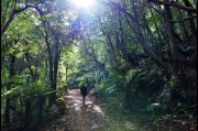 Hiking up Mount Dromadary (Gulaga), New South Wales