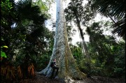 At the huge old blotchy gum tree on the South Coast