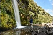 Dawson Falls, North Island - New Zealand