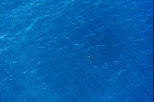 A Dolphin, Kiama