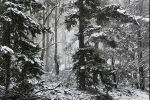Ginkin Forest