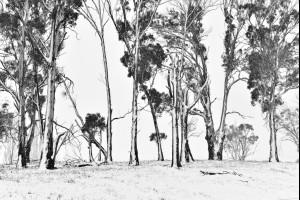 Frozen GumTrees