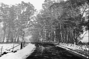 Sideways Snow