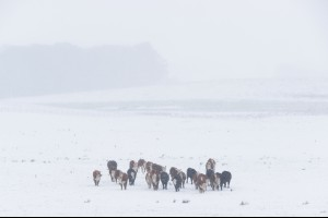 Cold Hard Winter