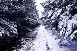 White Christmas Lane