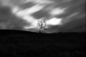 The Akanaw Tree