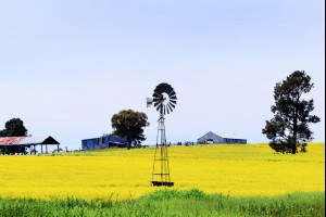 Canola Mill