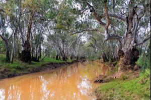 The River Gums