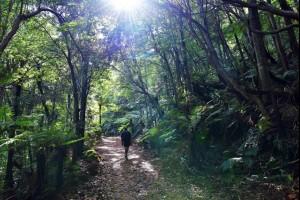 Hiking Gulaga