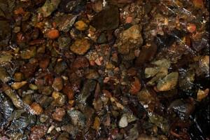 Pinkwood Pebbles