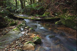 Deua Rainforest