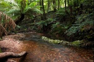 Pinkwood Creek