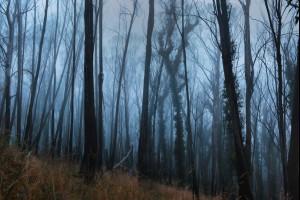 Mist of the Mountain
