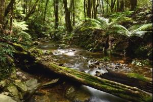 A Beautiful Nature