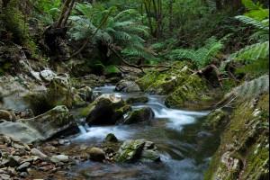 Deua Cascades