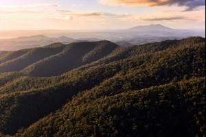 The Golden Hills