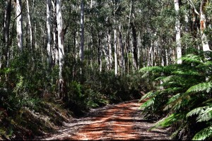 White Gum Road