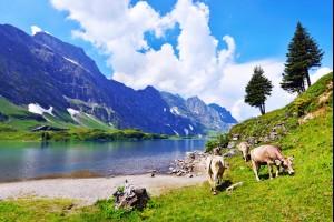 A Swiss Summer