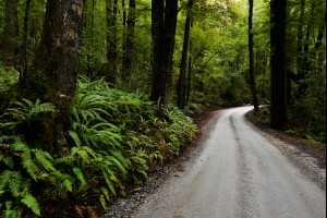 Rainforest Road