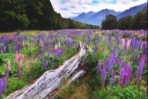 Field of Beauty