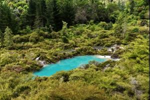 Aqua Pond