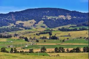 Fields of Saddleback