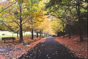 A Burst of Autumn