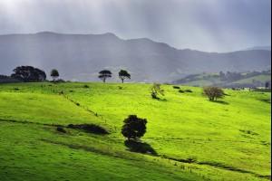 Jamberoo Hills
