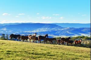 Saddleback Horses