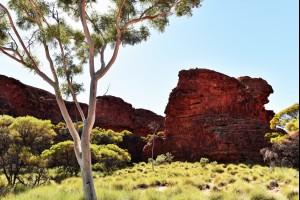 A Rugged Landscape