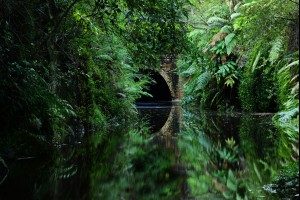 The Jungle Tunnel