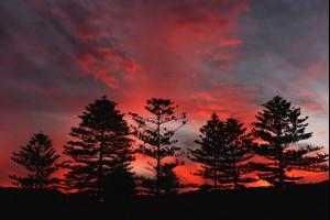 Thirroul Pines