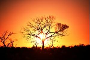 The Wilcannia Tree