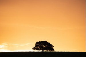 The Little Dunmore Tree