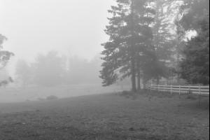The Bowral Fog
