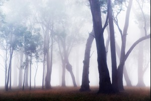 Gums in the Fog