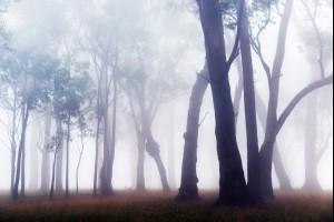 Gums in the Fog