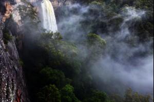 Jungle Misting