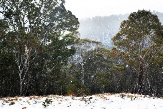 Jindabyne Flurries