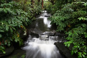 Garden Cascades