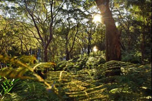 The Fern Forest