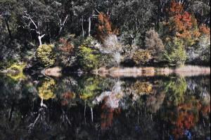 Colour Reflections
