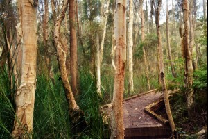 The Swamp Forest