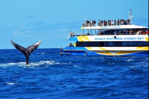 Whale Spectacle