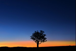 Lonely Dusk