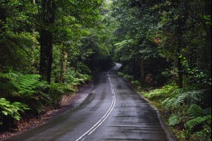The Rainforest Road