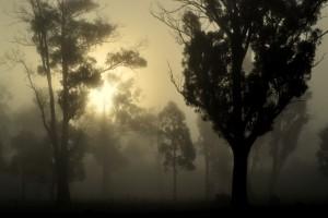Cold Launie Fog