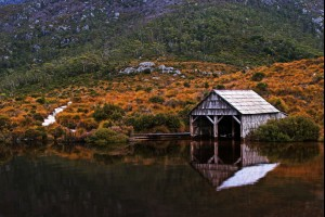 The Cradle Shed